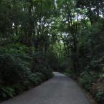 """東京の鎮守の森 """"明治神宮"""""""